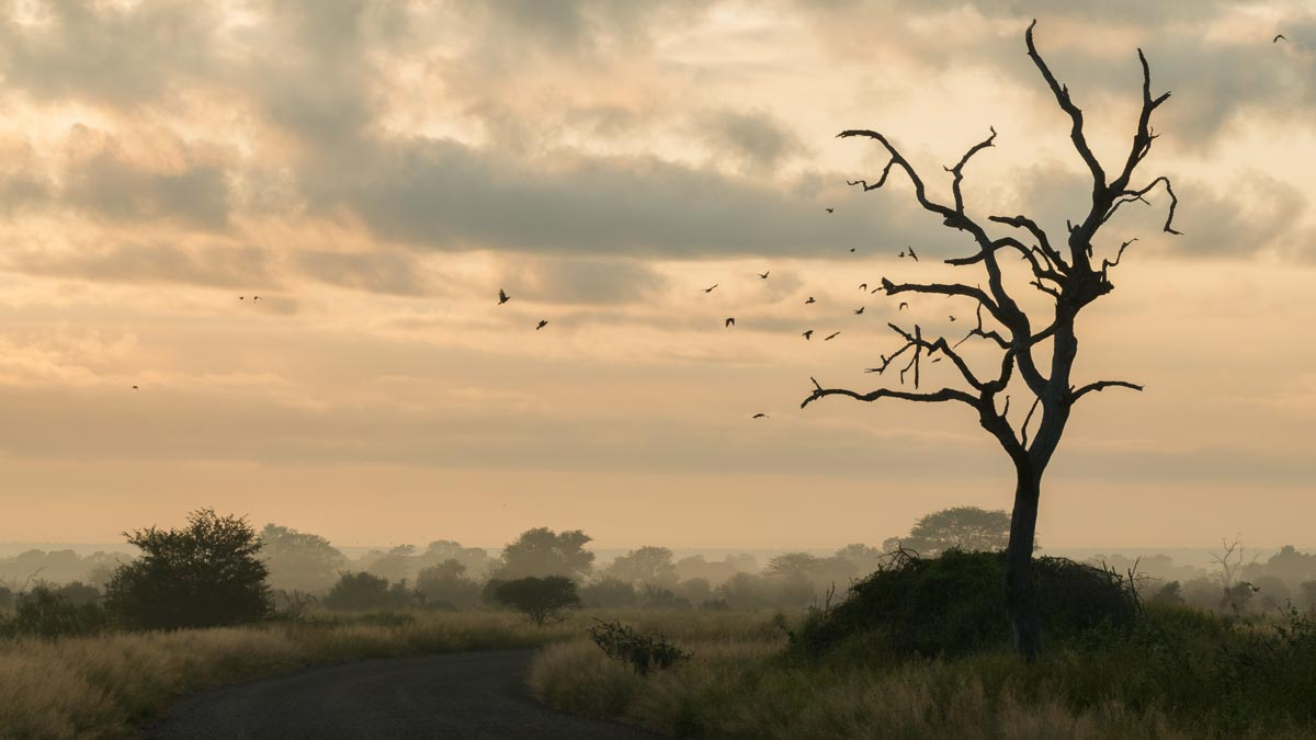 Why you should visit Kruger