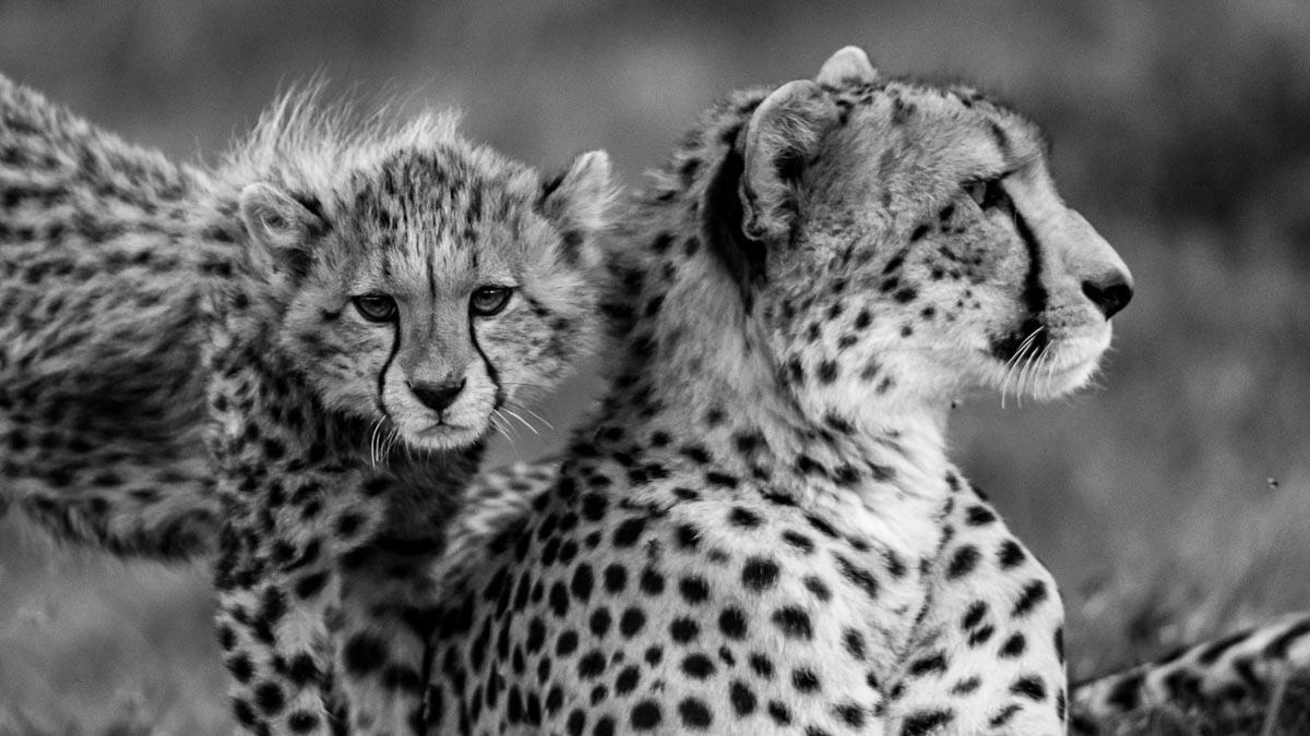 Why you should visit Masai Mara