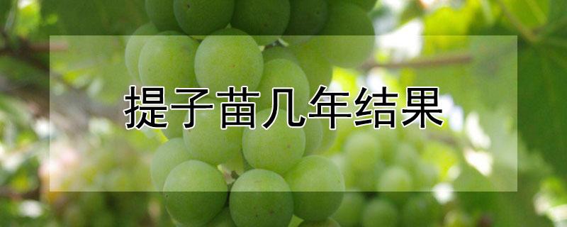 葡萄籽如何發芽快 —【發財農業網】
