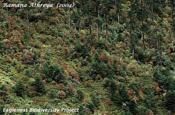 birding hotspots of . arunachal