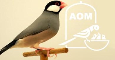 13 Mostra Ornitologica 2007
