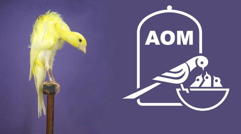 Mostra Ornitologica 2009