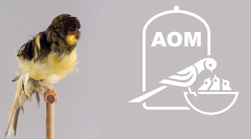 21 Mostra Ornitologica 2016