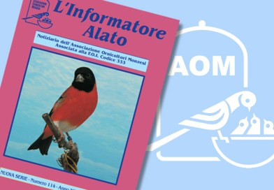 Informatore Alato 2019 N114