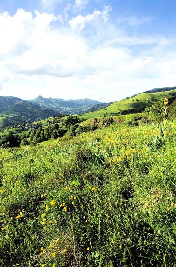 Paturage montagnes Cantal
