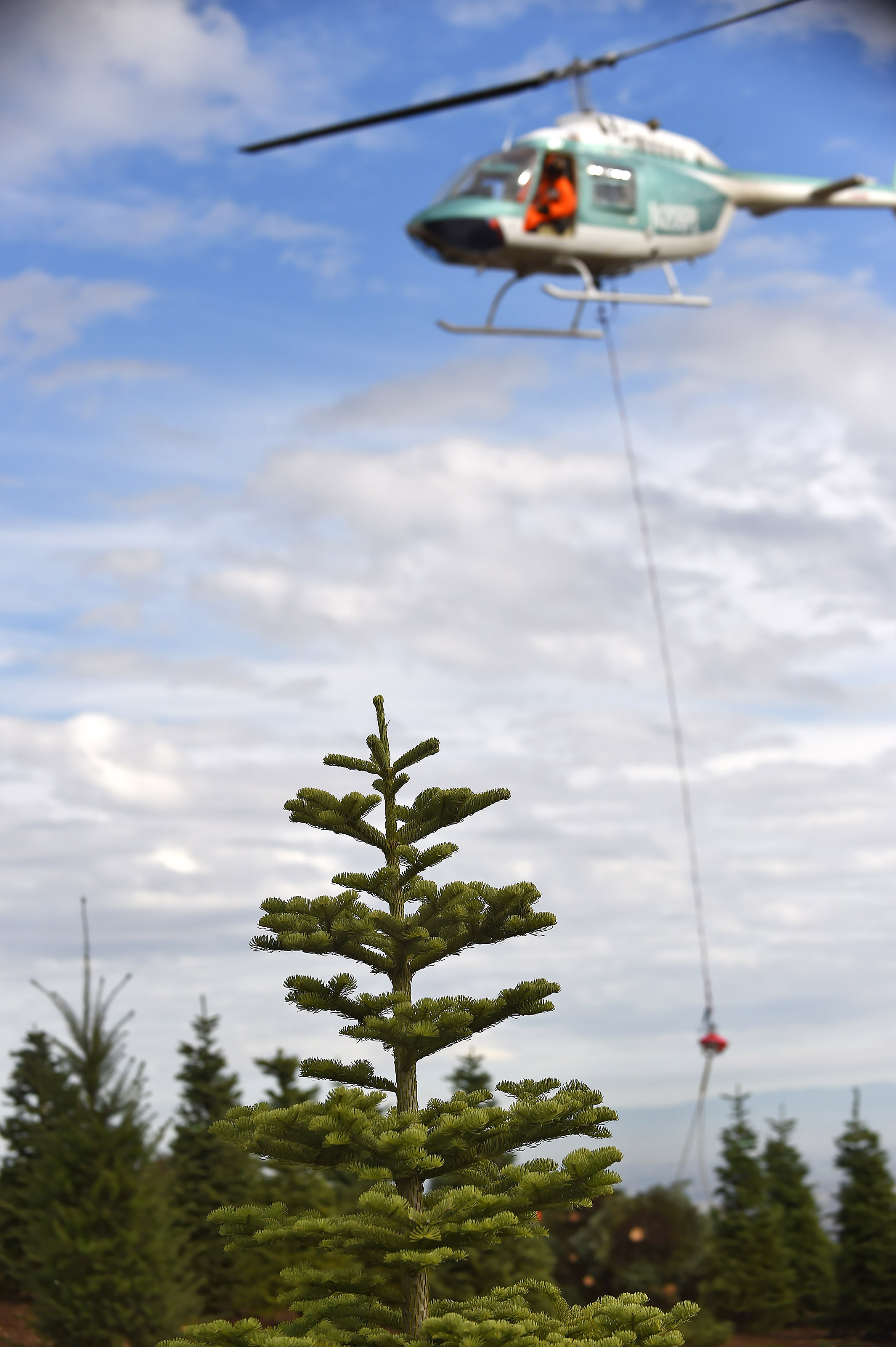 helicopter harvest spreads cheer