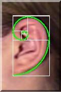 https://i0.wp.com/www.aoum1.persiangig.com/image/phi03_ear-spiral.jpg