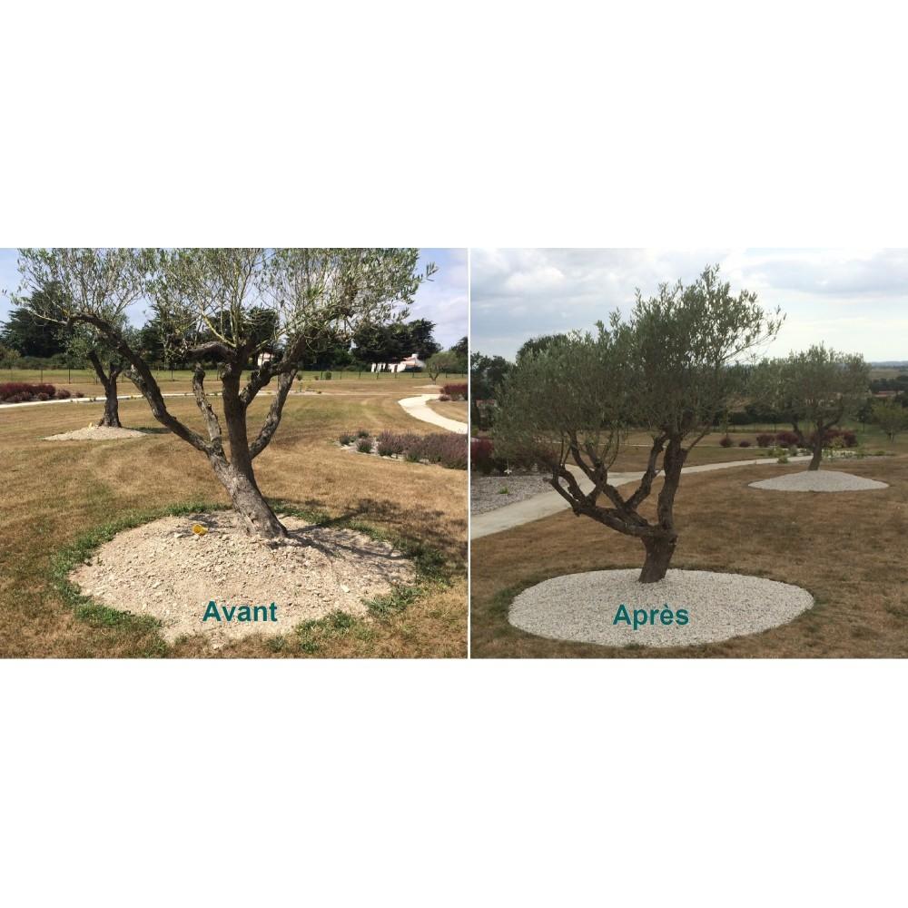 entourage d arbre pvc blanc carres et
