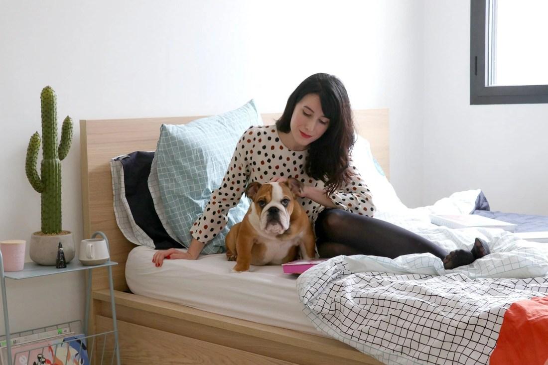 englishbulldog5