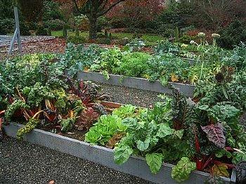 Fall Garden Vegetables 21 Vegetables For The Fall Garden Vegetable