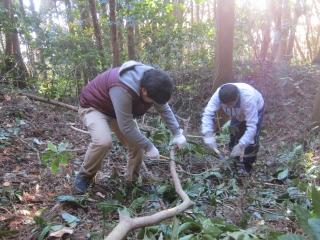 研究者と千葉県酪農のさとスタッフによる山林整備