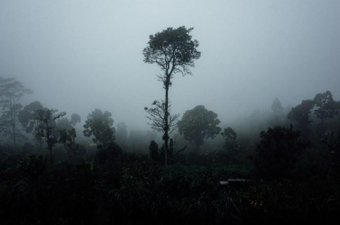 apelphotography-ricohgrii-newricoh-reviewcamera-ricohreview-pandeheryana_13