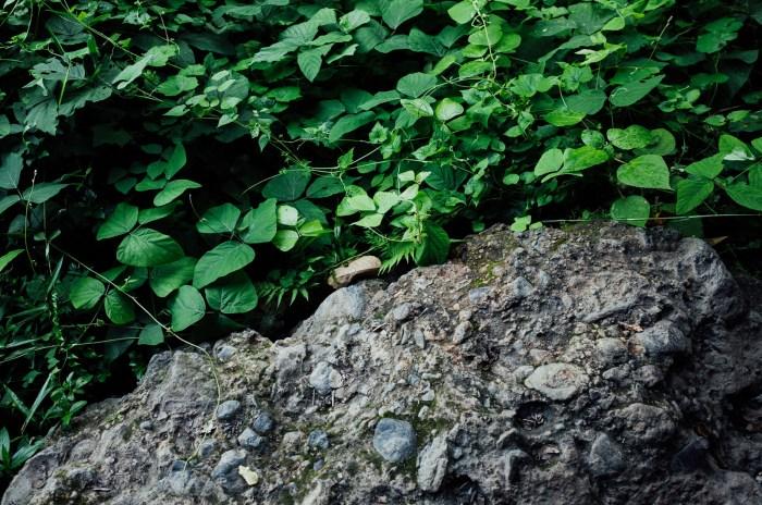 ricohGRII-pocketcamera-streetphotography-reviewcamera-gearforphotography-apelphotography-pandeheryana_13