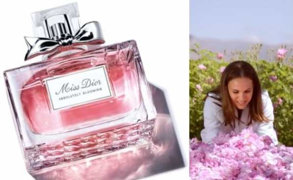 dcfc76a21 عطر دميس ديور أبسولوتلي بلومنج Miss Dior Absolutely Blooming