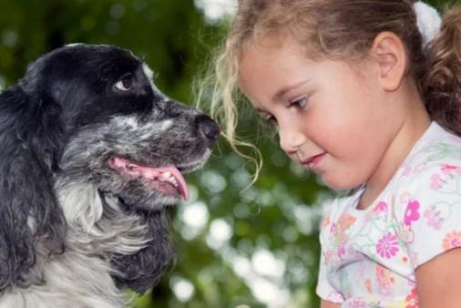 Razas de perros pequeos para nios  Aperradoscom