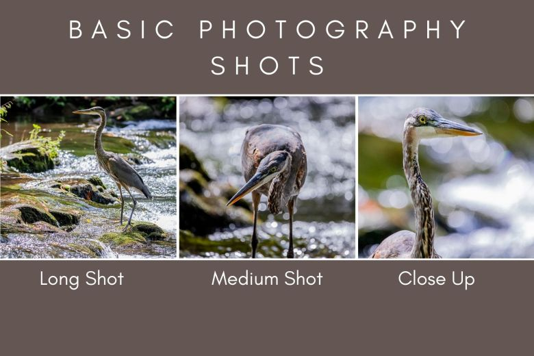 Photography Graphic of a blue heron to demonstrate long shot, medium shot, and close up