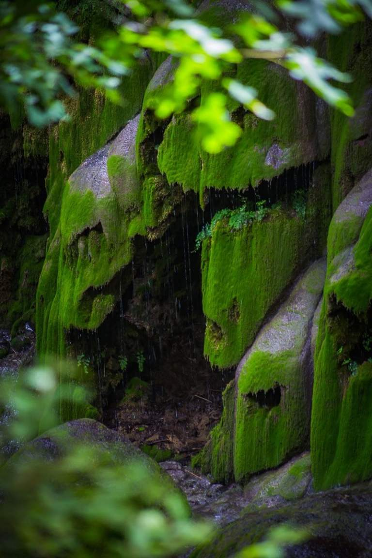 Cave covered in moss at Gorman Falls