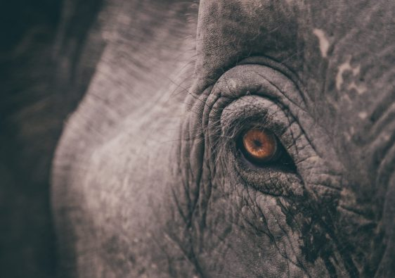 Close up of an elephant's eye - elements of a good photo feature image