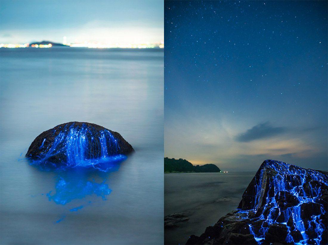 lucciole di mare sulle spiagge giapponesi 1