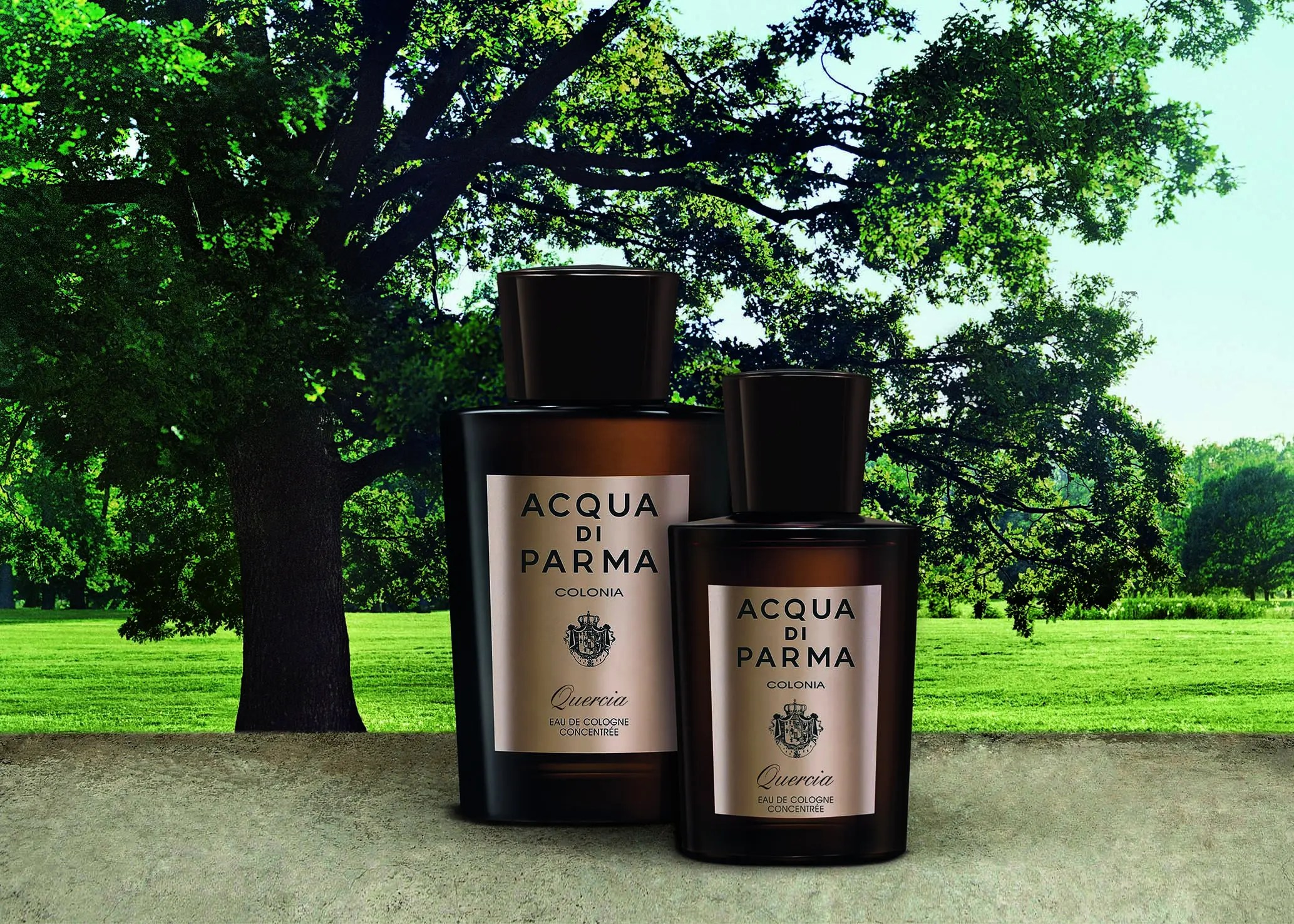 Acqua di Parma Colonia Quercia - Ape to Gentleman