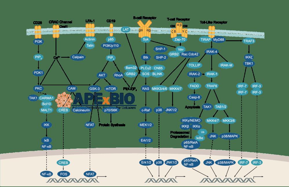 medium resolution of immunology inflammation