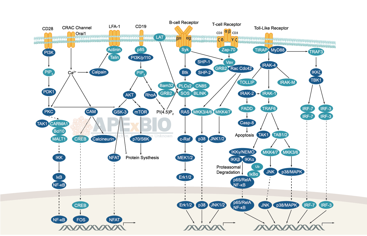 hight resolution of immunology inflammation