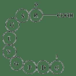 Laminin (925-933)|Extracellular matrix glycoprotein|CAS