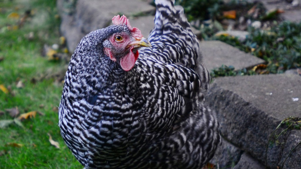 Bird Flu Detected In Oregon Poultry Flock, USDA Reports