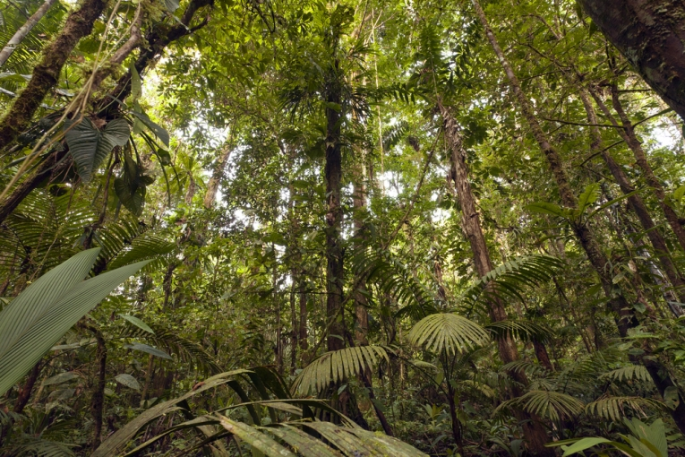 Amazonian Rainforest Depends on the Sahara Desert