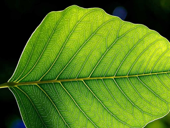artificial leaf