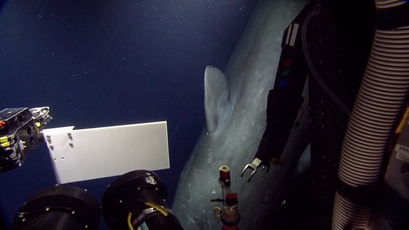 ROV Receives Surprise Visit From Sperm Whale