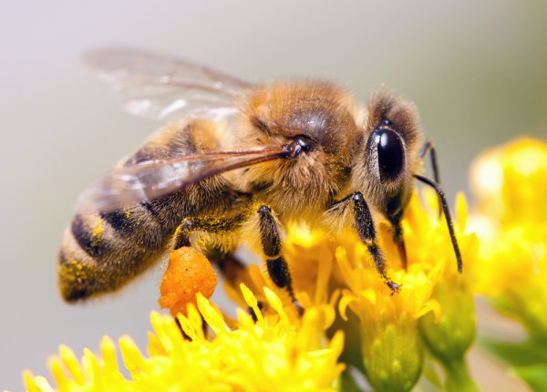 Buzzing Bees Do All The Work