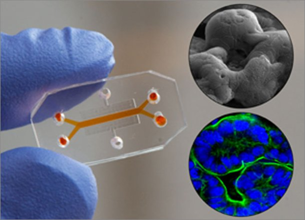 Organs-On-Chips