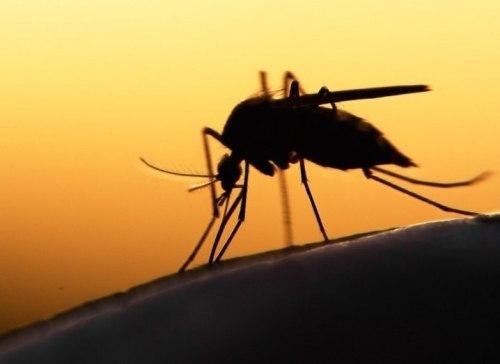 """""""malaria death africa vaccine mosquito"""""""