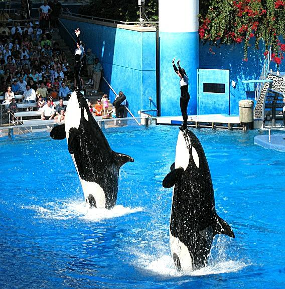 Killer Whales Live Long Lives