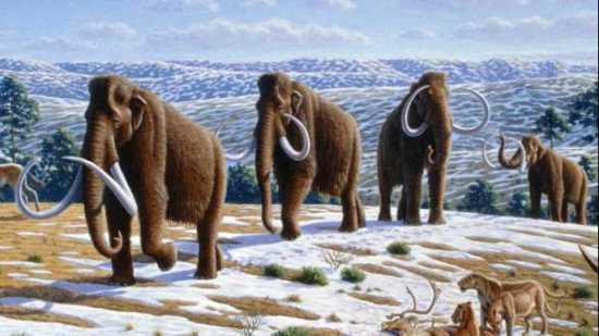 """mammoth extinction man climate change"""