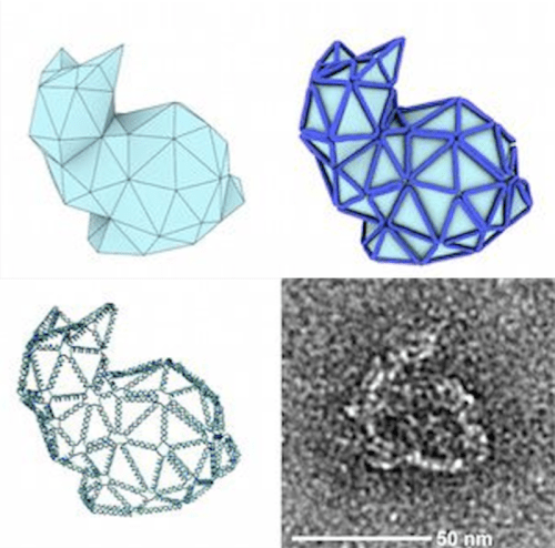 """""""origami dna bunnis strands structures 3d printed"""""""