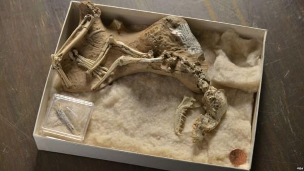 """Prehistoric dog fossil"""
