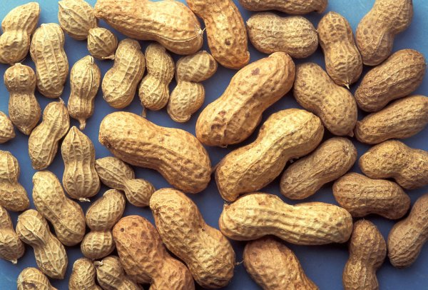 Nut Allergies May Be Going Extinct