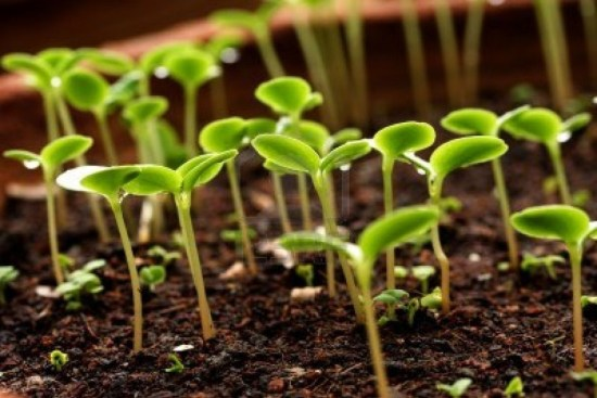 Plants Send Out Animal-Like Stress Signals