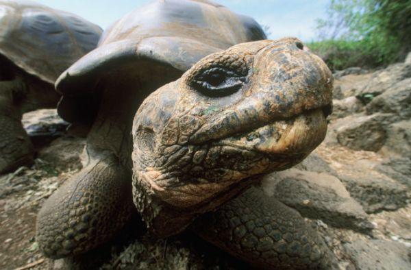 """""""tour de turtles 2015 edition"""""""