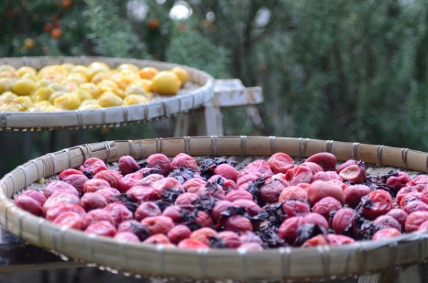 Dried Plums May Protect Against Colon Cancer