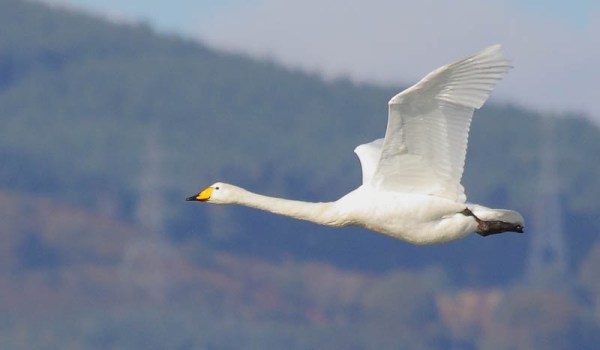 """""""swans are the inspiration for drones"""""""