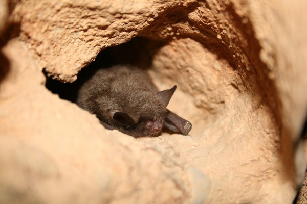 """national park caves closed for the sake of bats"""