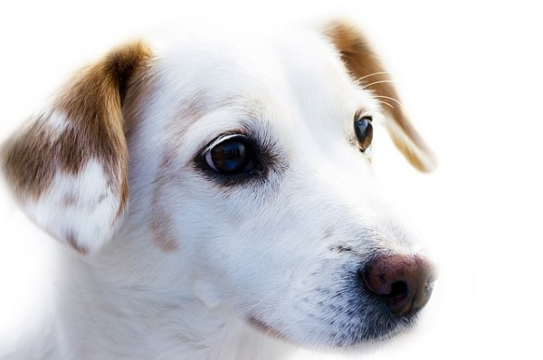 Pet Health - Smart Collars Monitor Pain And Fever