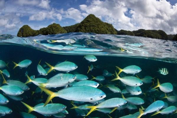 """palau marine sanctuary"""