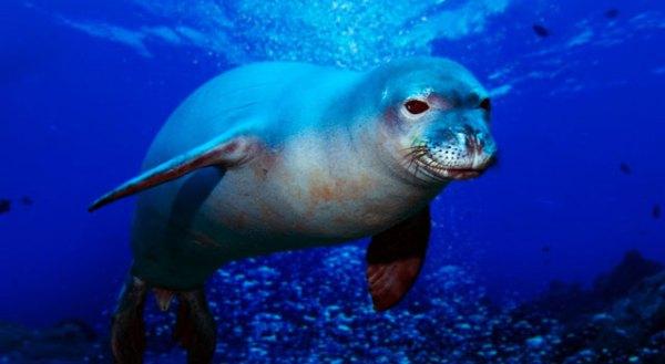 """marine animals endangered"""