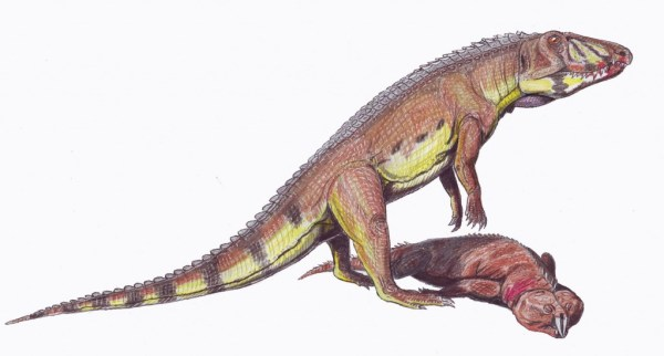 """ornithosuchus"""