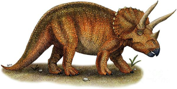 """Triceratops ancestor was hornless"""