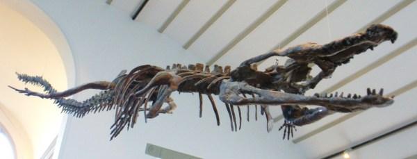 """Bus-Sized Crocodile Fossils were discovered in Tunisia """